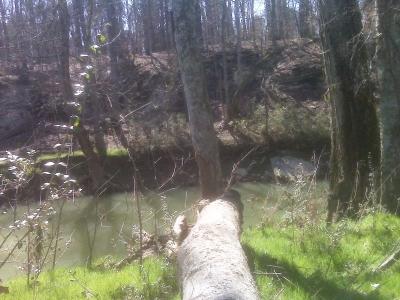 Creek3-20-2010